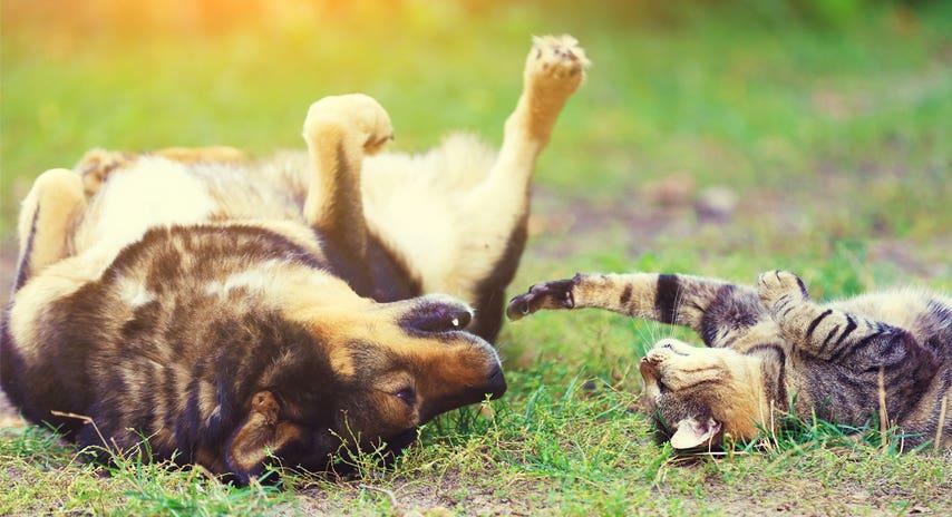Springtime + Pets = Heaven!