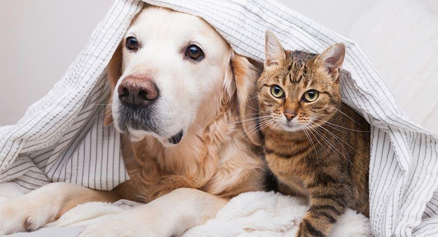 Translating Common Pet Behaviours