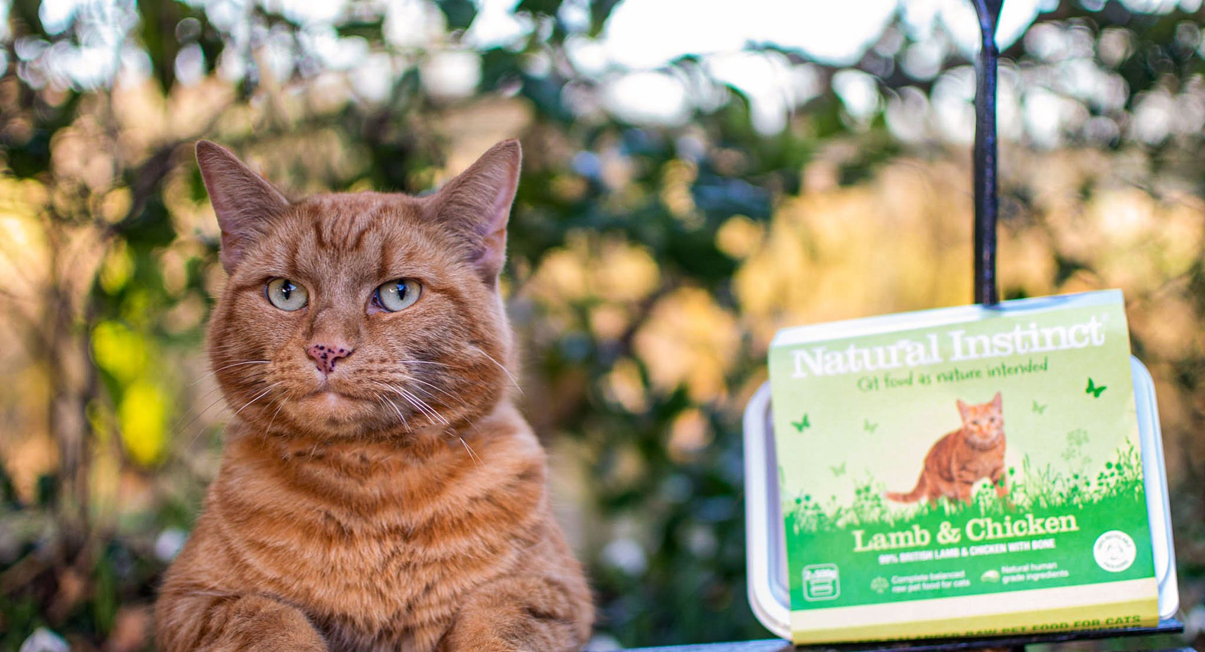 The Truth About Raw Feeding for Dogs and Cats