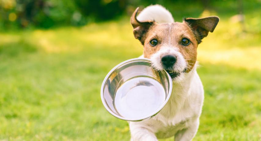 Handling Raw Pet Food - Hygiene Guidelines