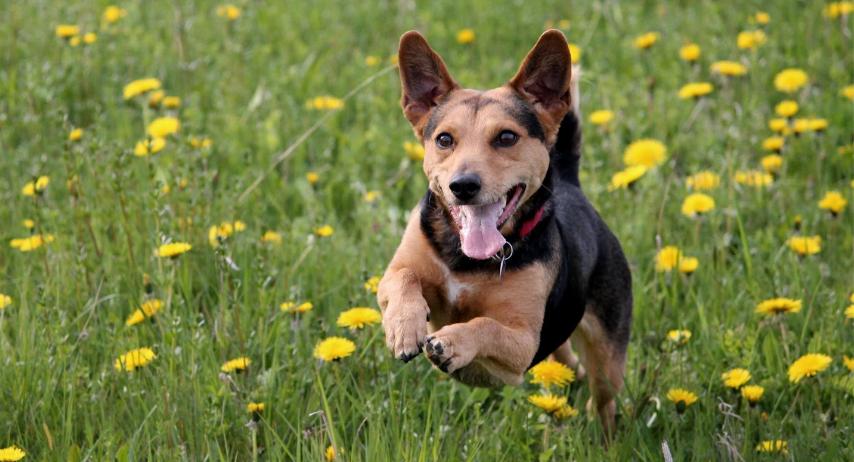 Natural Instinct's Doggy Diet Plan