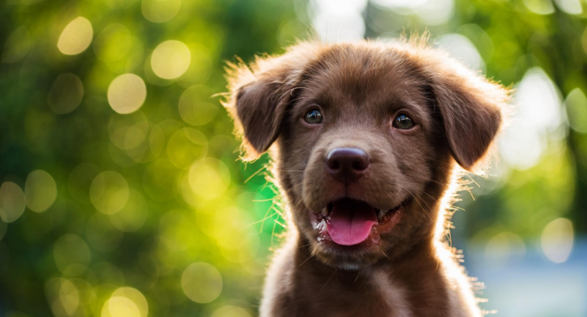 How to raise a puppy on Natural Instinct