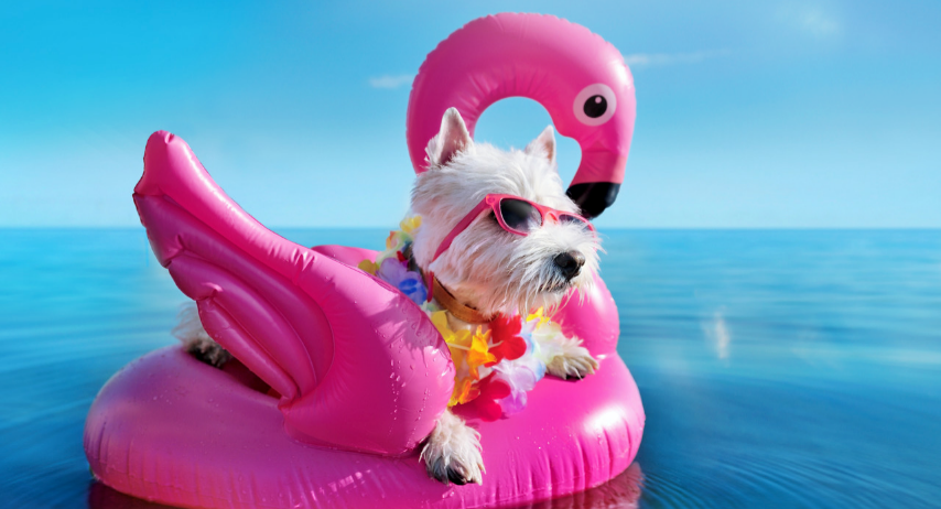 Keeping your pets cool this Summer!