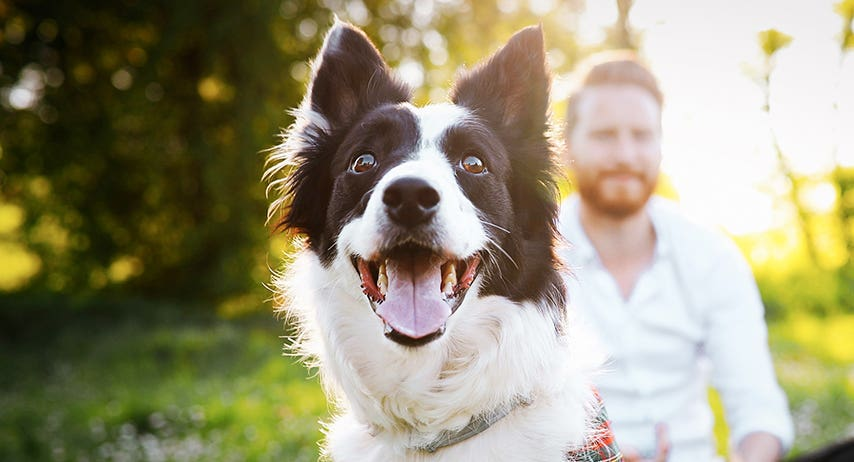 The lesser known benefits of dog walks
