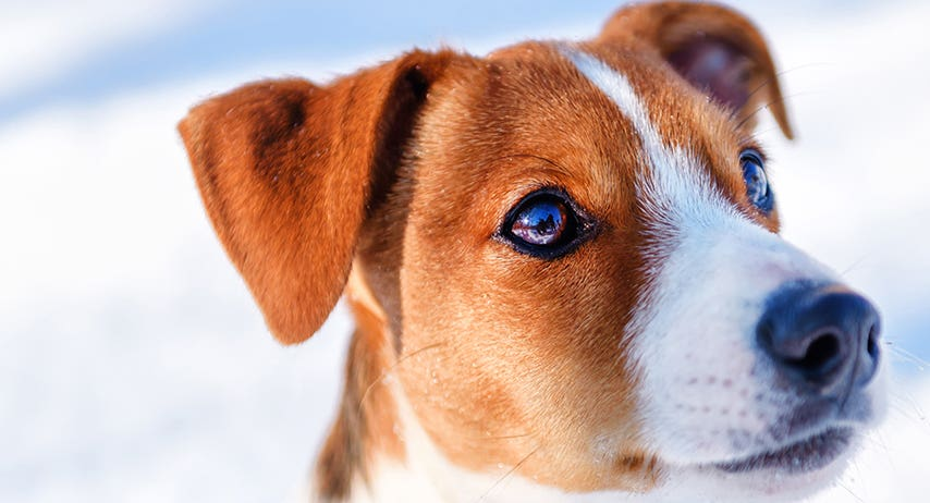 5 games to keep your dog on the ball during Winter!